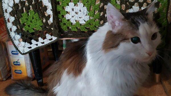 Кот Лёша