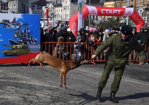 Кинолог с собакой во время демонстрационных выступлений на праздничных мероприятиях в честь Дня защитника отечества во Владивостоке