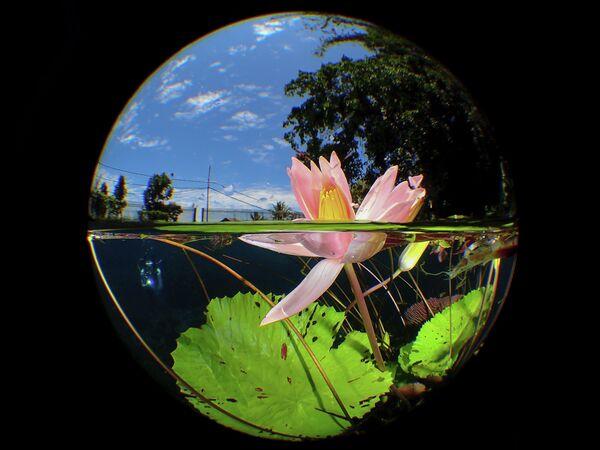 ManBd UiDive. Работа победителя конкурса The Underwater Photographer of the Year 2020
