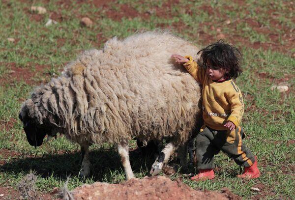 Ребенок играет с овцой в сирийском Аазазе