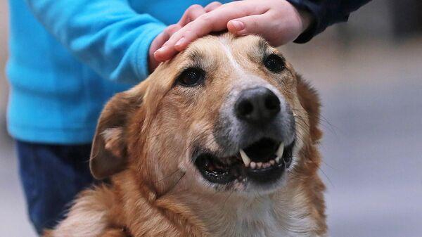 Ученые выяснили, как стерилизация влияет на здоровье собак
