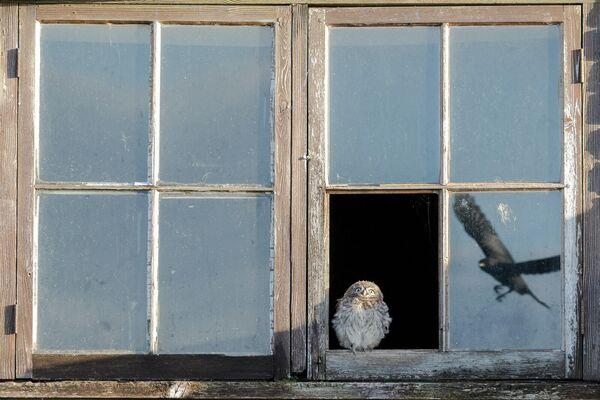 Paul Holman. Работа победителя конкурса Nature TTL Photographer of the Year 2020