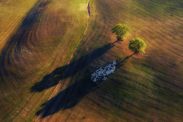 Marek Biegalski. Работа победителя конкурса Nature TTL Photographer of the Year 2020