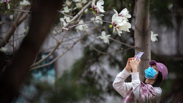 Цветение сакуры в Пекине