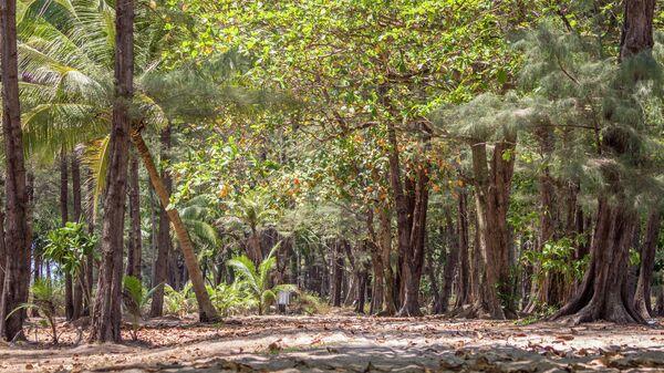 Национальный парк Сиринат в районе Майхао на острове Пхукет в Таиланде