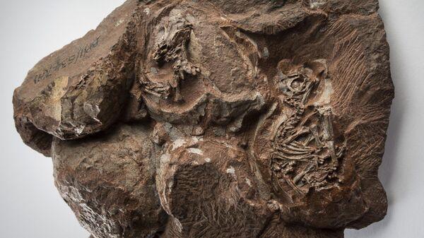 Одна из древнейших в мире находок эмбрионов динозавра возрастом около 200 миллионов лет, обнаруженная в 1976 году в Национальном парке Голден Гейт, Южная Африка