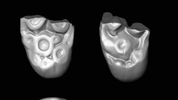 Находки зубов показали, что древние обезьяны переплывали Атлантику