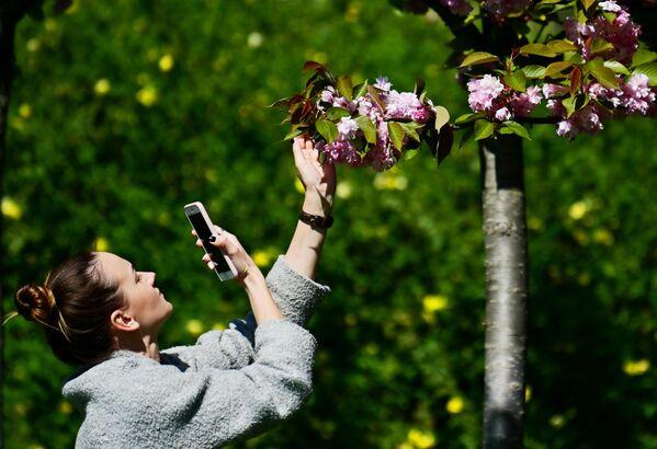 Девушка фотографирует на мобильный телефон цветы черешни на аллее Черешневый сад в Сочи