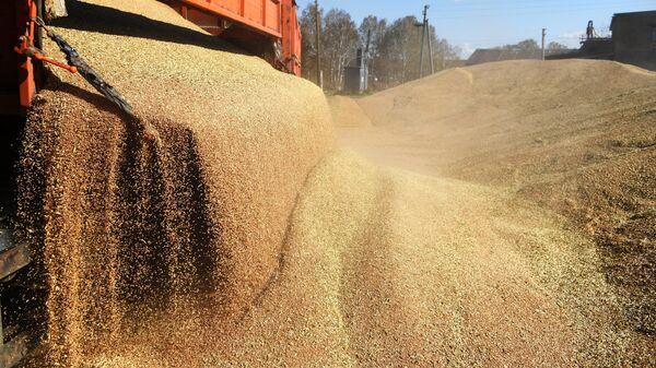 Разгрузка пшеницы
