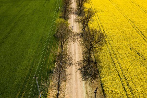 Цветение рапса в Краснодарском крае