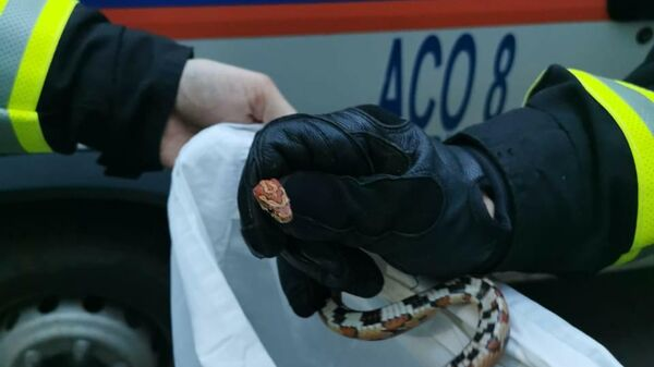Змея, найденная в квартире на юго-западе Москвы