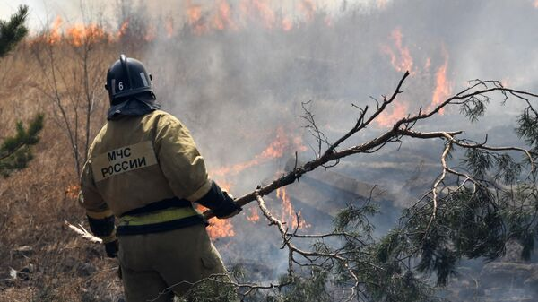 Сотрудник пожарной службы МЧС РФ во время тушения лесного пожара