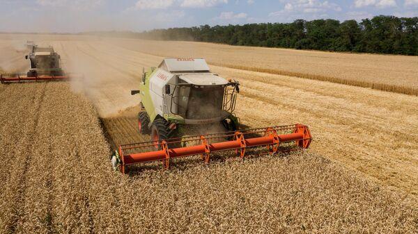 Уборка озимой пшеницы на поле в Усть-Лабинском районе Краснодарского края