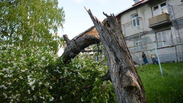 Сломанное дерево после ураганного ветра