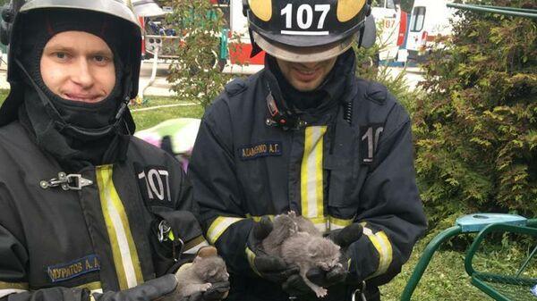 Сотрудники МЧС спасли четверых котят из пожара на западе Москвы