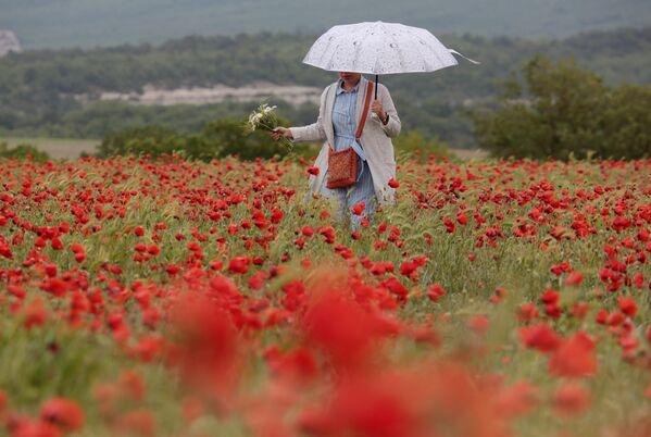 Девушка гуляет на маковом поле в Крыму