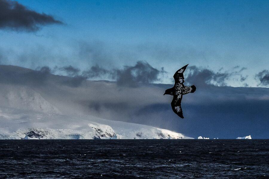 Южная оконечность острова Петра в антарктической части Тихого океана, в море Беллинсгаузена, в 400 км от побережья Антарктиды