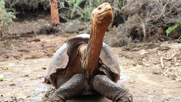 Ученым удалось спасти от вымирания гигантских черепах