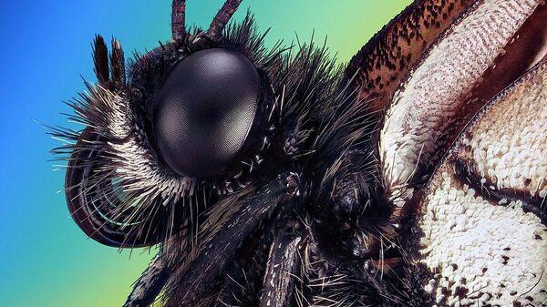 Экстремально резкий и детальный портрет бабочки-боярышницы (лат. Aporia crataegi), автор Retro Lenses