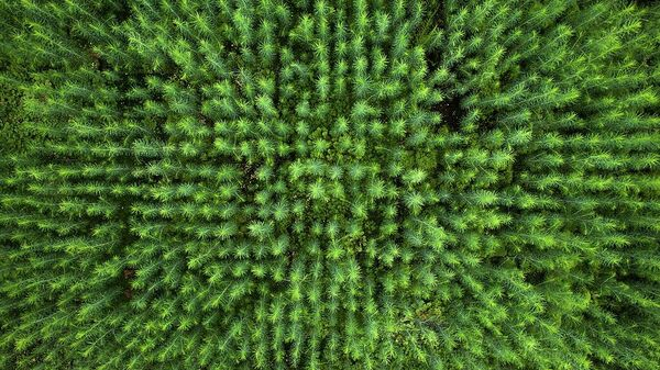 Будущий лес, автор Mikhail Kapychka