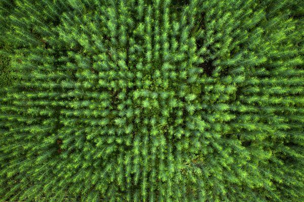 Природа, 2-е место. Будущий лес