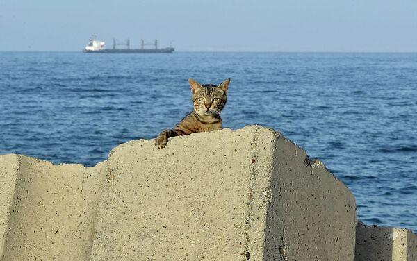 Кот сидит на набережной в Алжире