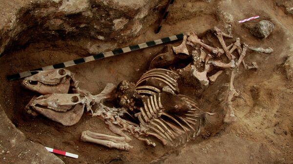 Ученые нашли самые древние свидетельства всадничества в бронзовом веке