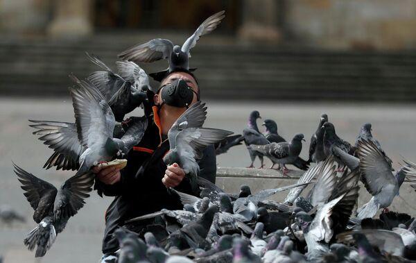 Мужчина в защитной маске кормит голубей в Боготе, Колумбия