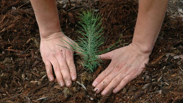 Хвойный лес высадят в форме числа 650 к юбилею Калуги