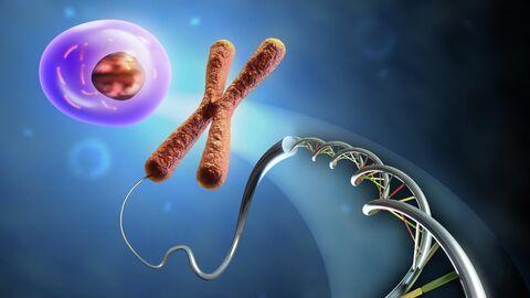 Образование клетки из ДНК и хромосом