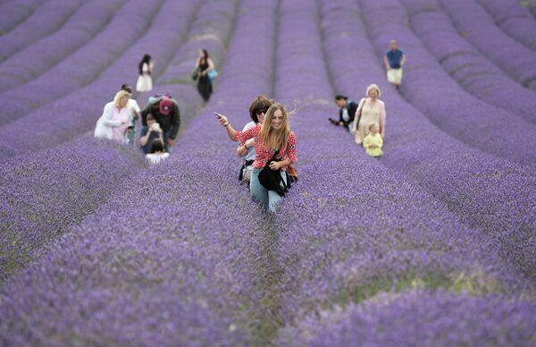 Люди гуляют в лавандовом поле в Икльфорде, Великобритания