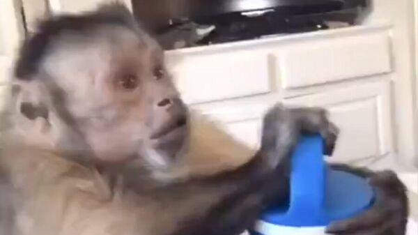 Видео с открывающей подарок обезьяной рассмешило пользователей Сети