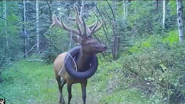 Стоп-кадр видео из твиттер-аккаунта Colorado Parks and Wildlife