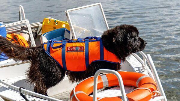 Собака-спасатель во время тренировки на воде
