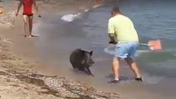 Кабан выплывает из моря