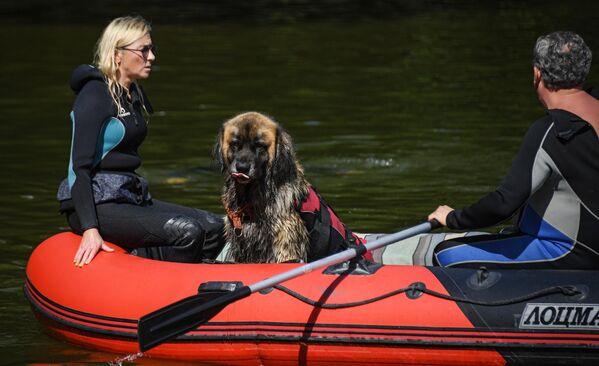 Сотрудники добровольного отряда Соттер с собакой-водолазом во время тренировок на поисково-спасательной станции Строгино