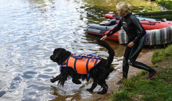 Сотрудник добровольного отряда Соттер с собакой-водолазом во время тренировок на поисково-спасательной станции Строгино