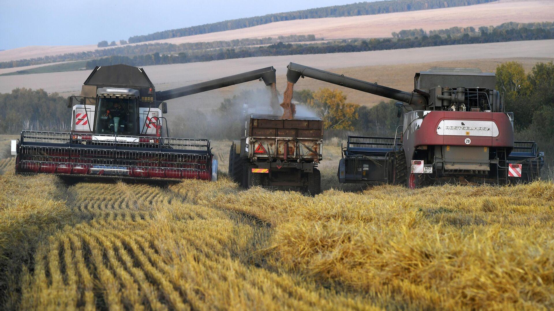 1577320022 0:90:3321:1958 1920x0 80 0 0 2160328bc9fd88c48bf7b406383a558c - Bloomberg признало господство России на мировом рынке пшеницы