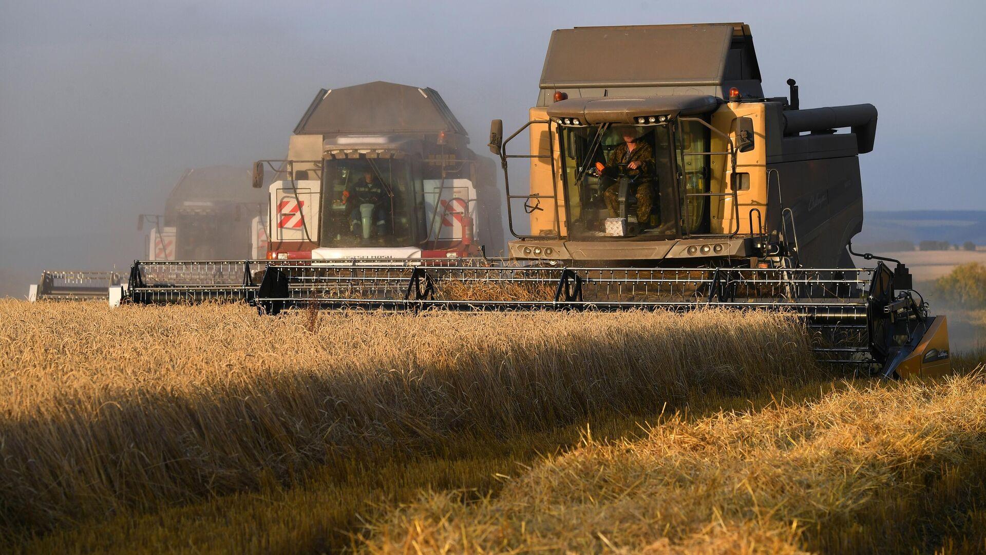Путин раскритиковал субсидирование экспорта зерна при росте мировых цен