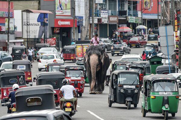 Погонщик едет на слоне среди уличного движения в Пилияндале, пригороде столицы Шри-Ланки, Коломбо