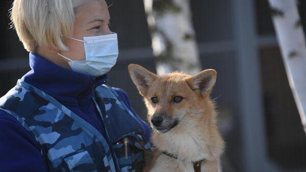 Кинолог с одной из служебных собак кинологического подразделения авиакомпании Аэрофлот в аэропорту Шереметьево, которых начали тренировать на выявление коронавирусной инфекции