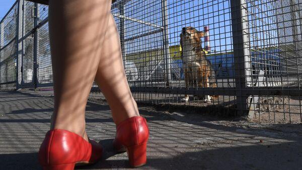 Сотрудница Аэрофлота у вольера со служебными собаками посещения кинологического подразделения авиакомпании Аэрофлот в аэропорту Шереметьево