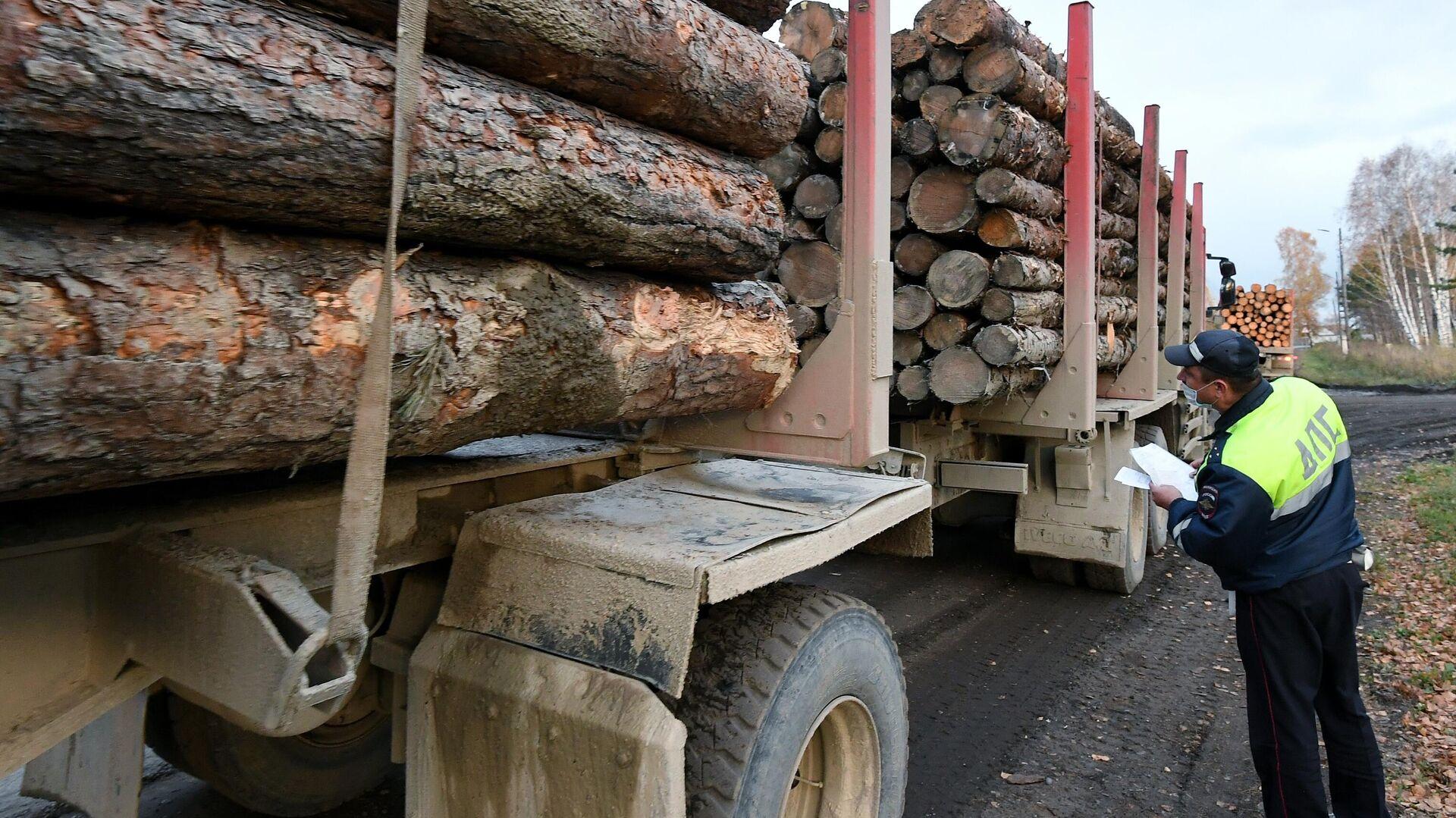 """1578157813 0:109:3051:1825 1920x0 80 0 0 8fc009e0cc489442de5e0db2e083064c - """"Невозможно терпеть"""": Путин прокомментировал запрет вывоза леса-кругляка"""