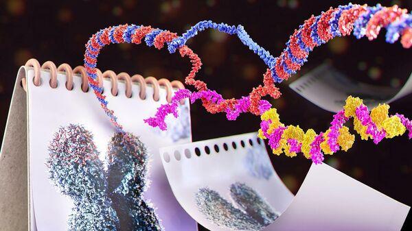 Молекулы РНК TERRA собираются на концах хромосом