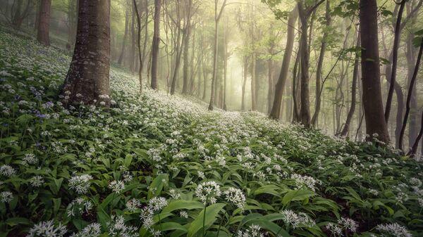 Chris Frost. Работа победителя конкурса Landscape Photographer of the Year 2020