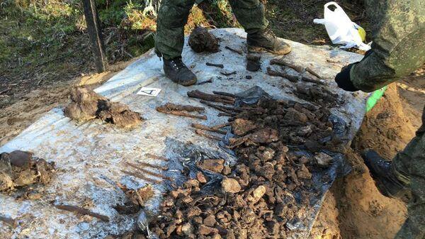 Фрагменты человеческих останков, найденные поисковиками на месте казней мирного населения гитлеровскими карателями возле деревни Глоты Псковской области в годы Великой Отечественной войны