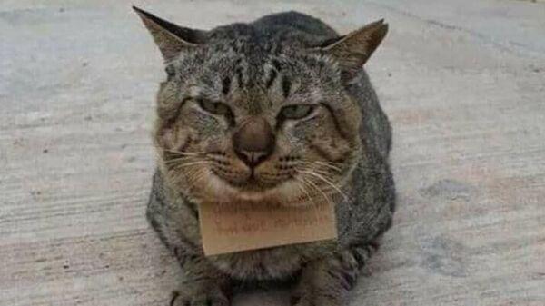 Тайский кот, вернувшийся домой с запиской о долге за рыбу