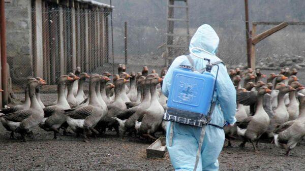Профилактические мероприятия против птичьего гриппа