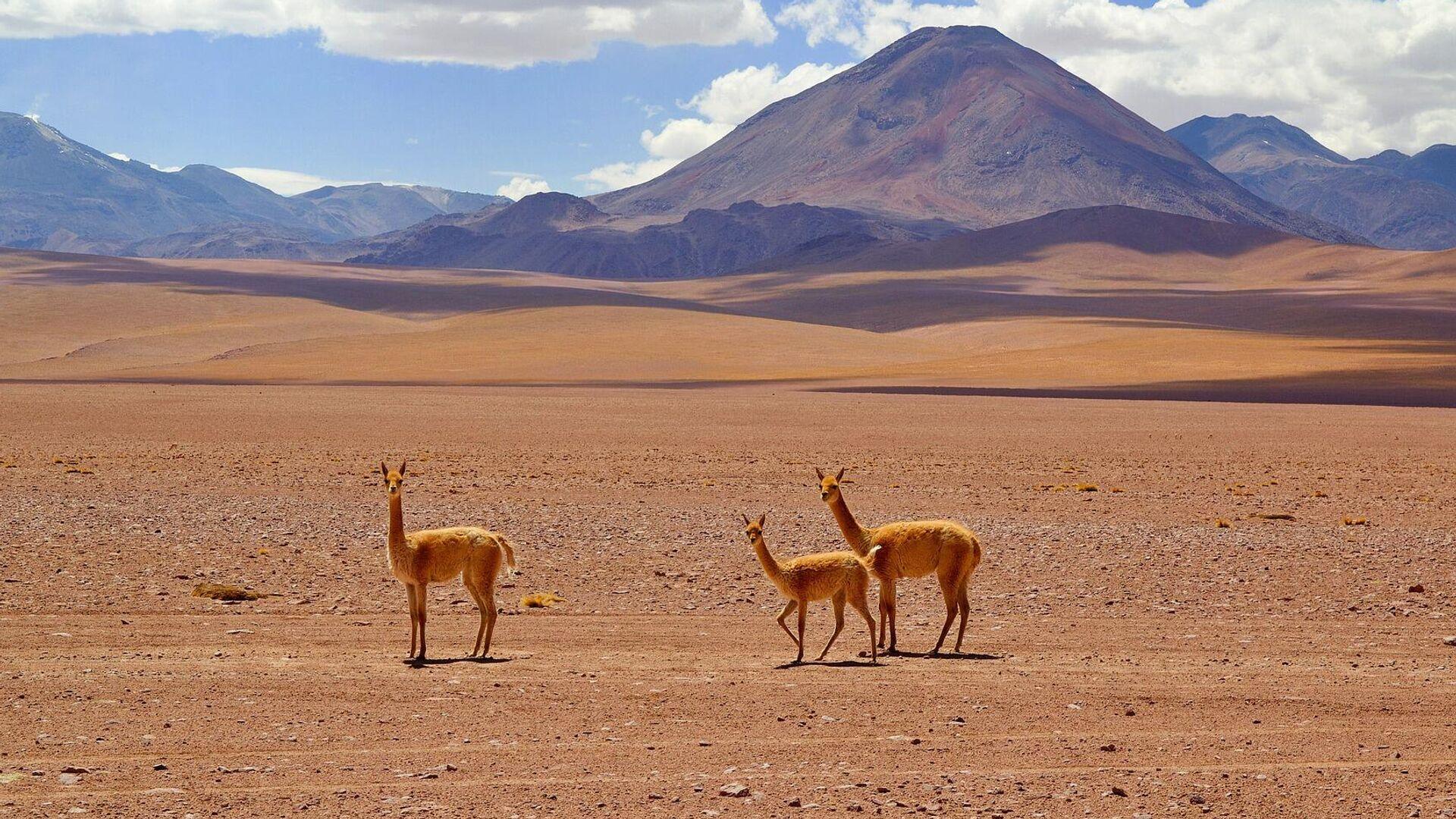 Пустыня Атакама в Чили - РИА Новости, 1920, 05.01.2021