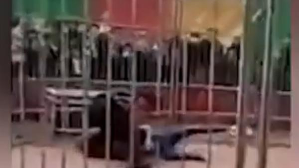 Тигр напал на дрессировщика во время представления